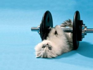 CatLiftingWeights